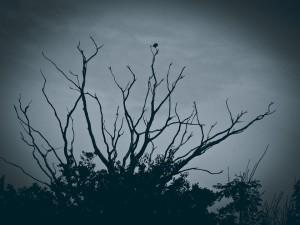 tree-829431_960_720